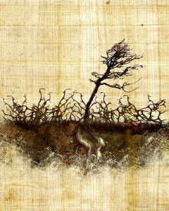 thorny ground