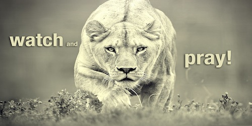 Watch-and-Pray-Lioness