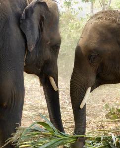 gillian rogers - elephant